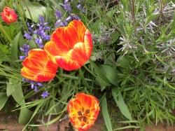fleur orange rouge jaune